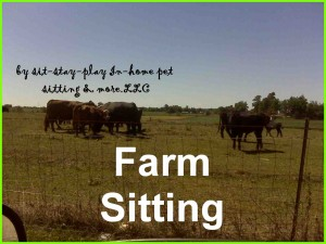 Farm Sitting by www.sit-stay-play.com