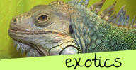http://www.sit-stay-play.com/exotic-pet-care