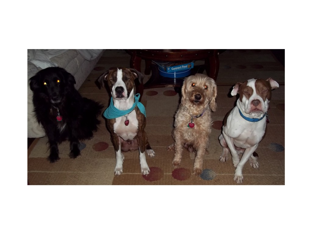 Training young puppies and adult dogs with sit-stay-play In-home pet sitting & more.LLC