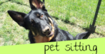 Pet Sitting Near Muncie, Indiana