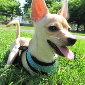 Pet Care Option for Downtown Muncie