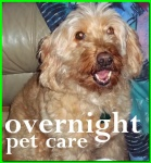 overnight pet services