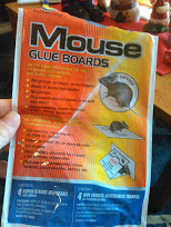 mouse glue boards unsafe cats