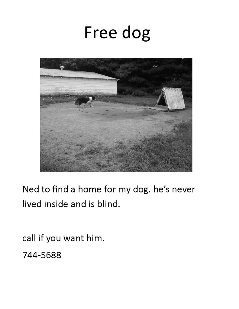bad-free-dog-ad