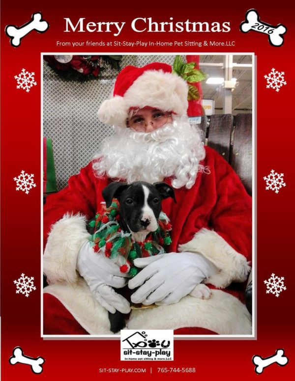 santa claus holding a pit bull puppy