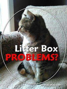 litter box problems