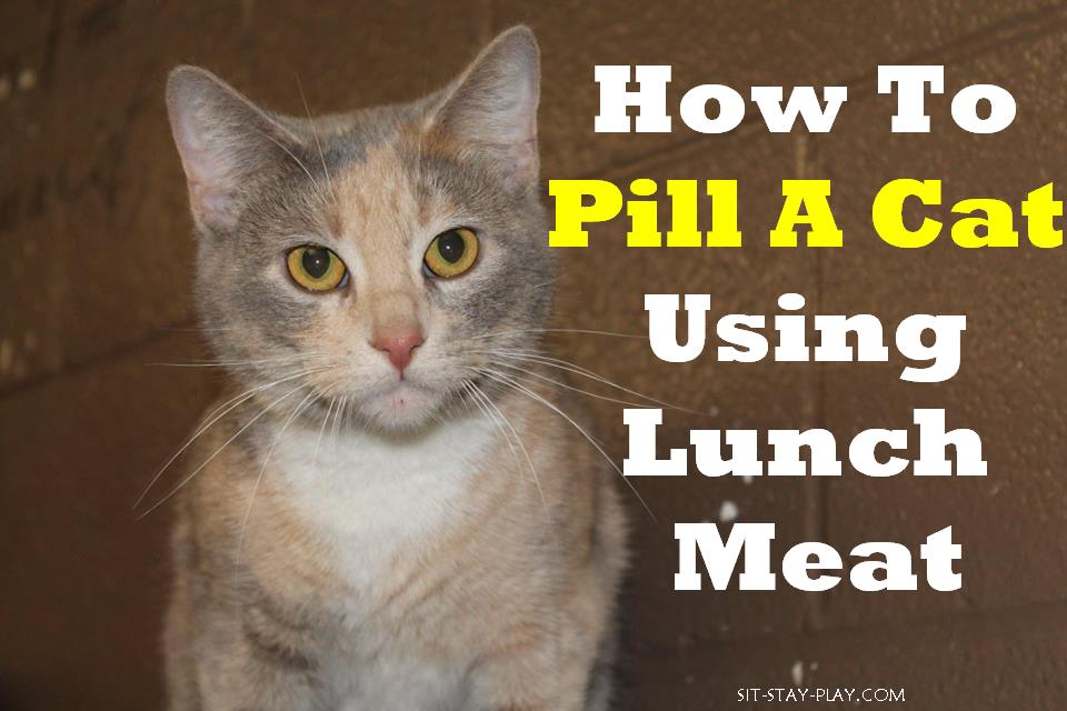how to pill a cat using lunch meat
