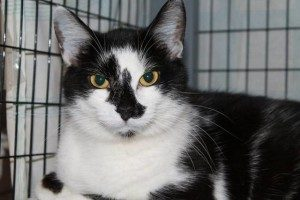 100 cats rescued in Daleville