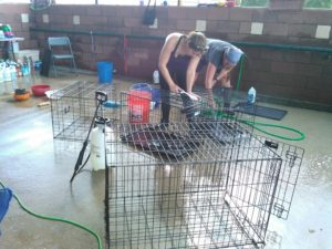 Cage and crate cleaning is just one way to help Louisiana animals at Lamar Dixon Expo Center.