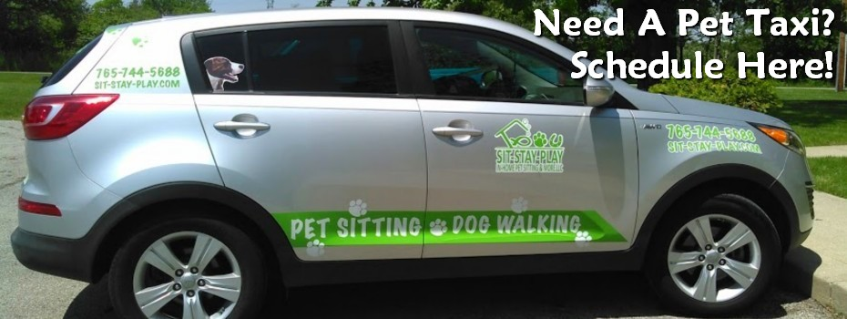 sit stay play in home pet sitting amp more llc pet sitting