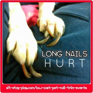 trim the dog's nails
