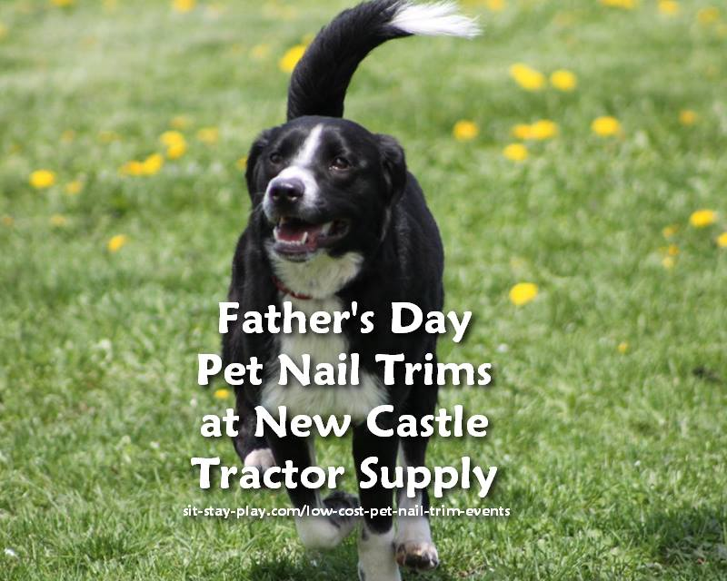 father's day pet nail trim events