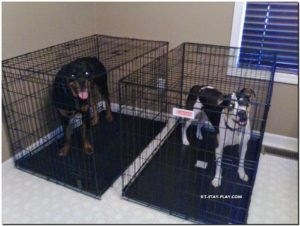 dogs in crates, Muncie Pet Sitter