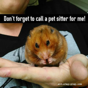hand with a hamster, Muncie Pet Sitter