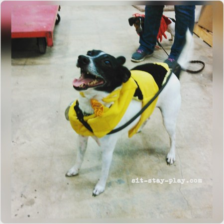 dog dressed in Halloween bumble bee costume