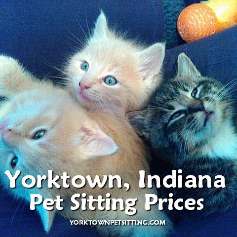 3 kittens, Yorktown Pet Sitting