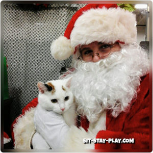 Santa and white cat