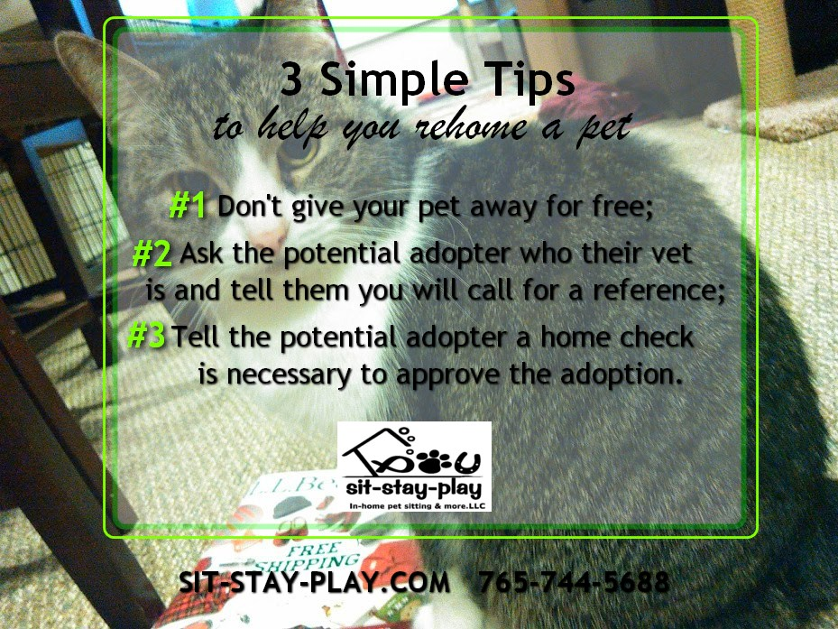 3 simple tips to help rehome a pet
