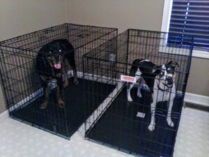 dogs in crates
