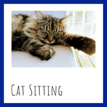 Long haired tabby cat with sit stay play Muncie pet sitter