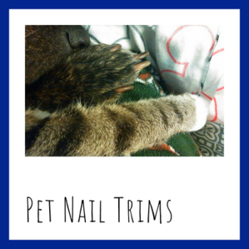 Pet nail trims by sit stay play Muncie pet sitter