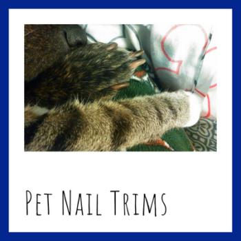 Pet nail trims by sit stay play Muncie pet sitter