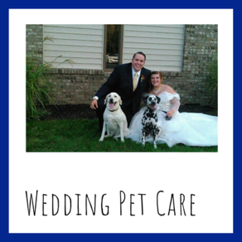 Wedding pet care by sit stay play Muncie pet sitter