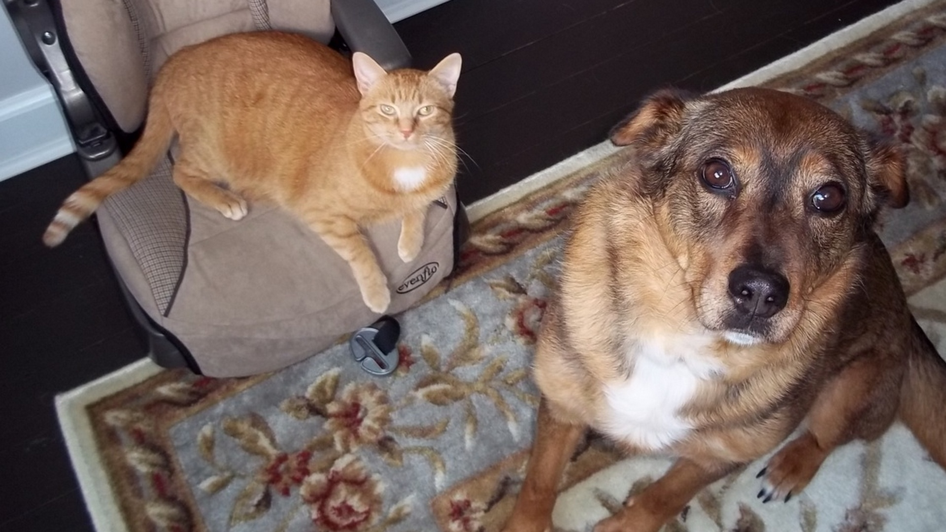 Dog and cat sitting next to each other